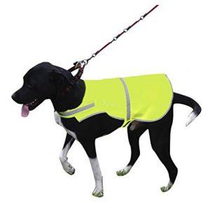 Gul Reflexväst Hund Exempel